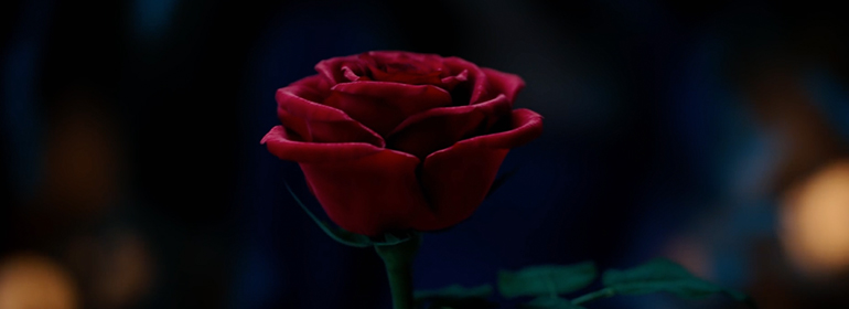 The gorgeous red rose from upcoming live-action movie Beauty and the Beast starring Emma Watson