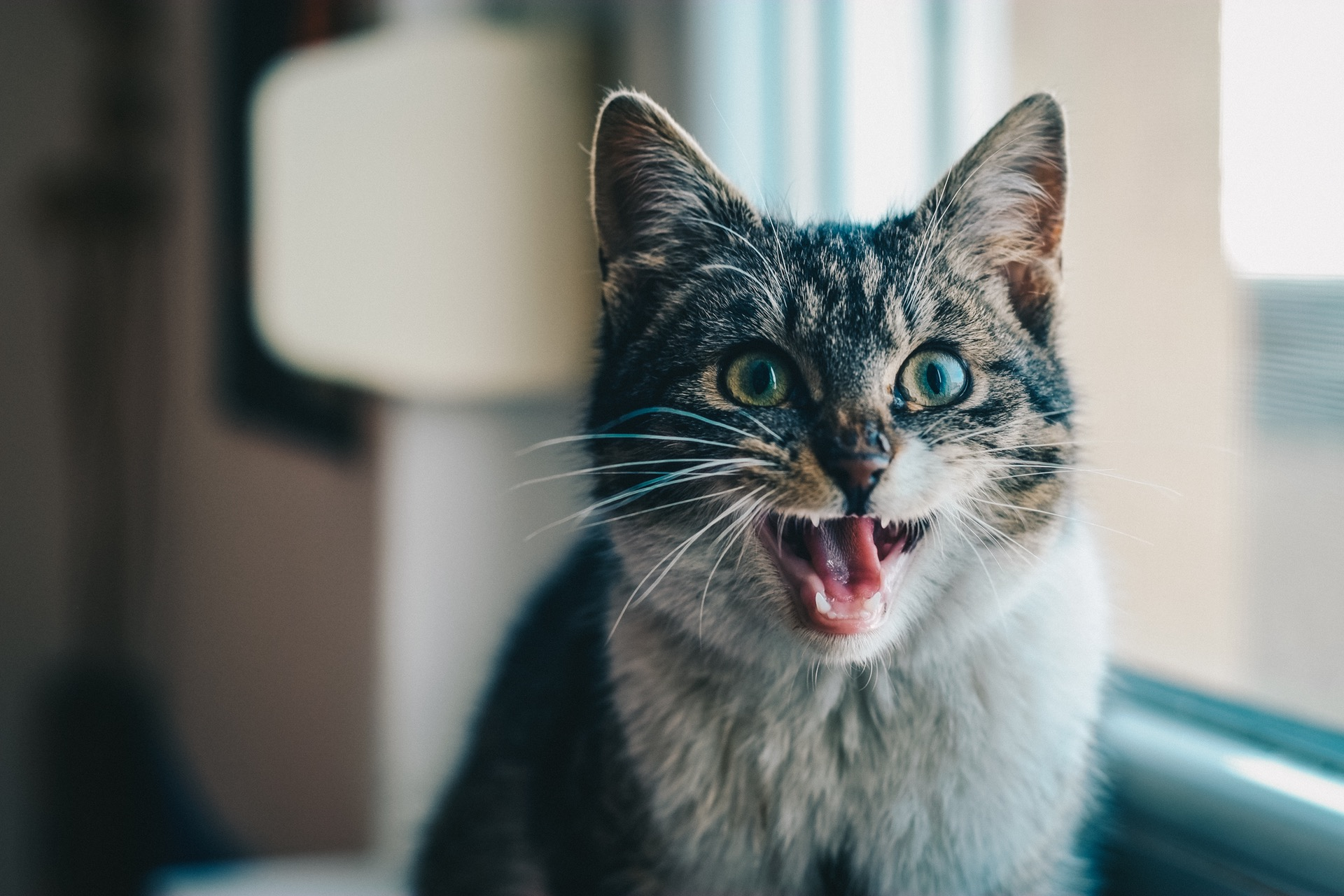 A picture of a cat to highlight that Toryn didn't become a cat lady as she feared when she told her father about being trans in her article about sex