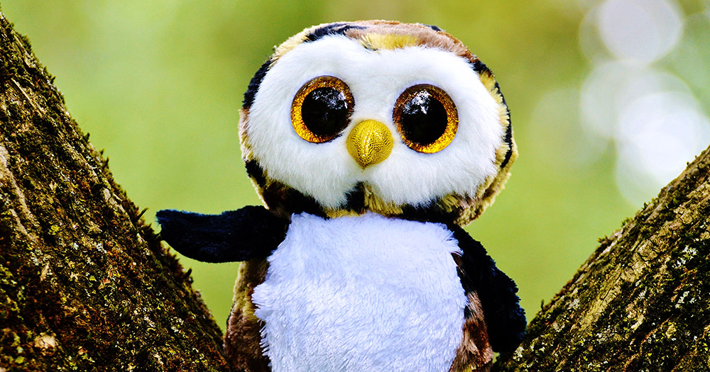 A cuddly Owl to symbolise the OWLS group which stands for older wiser lesbians