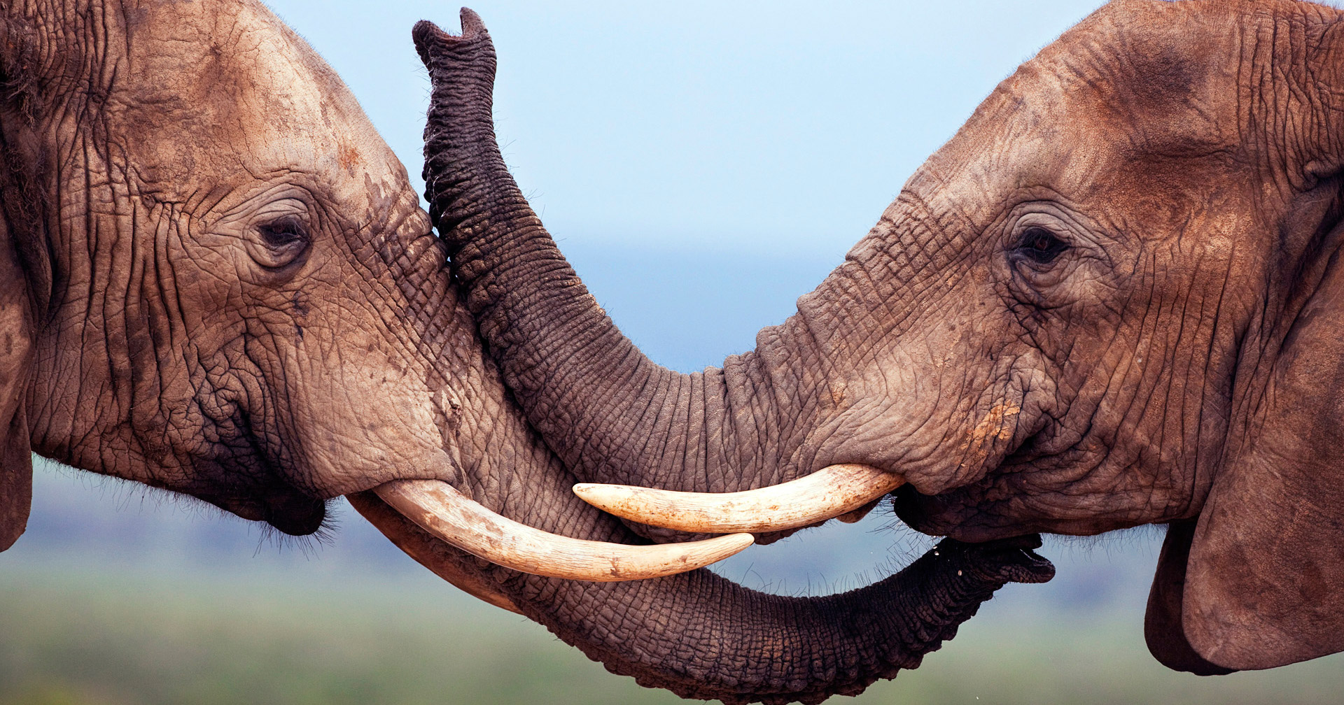 11 animals that show homosexuality is totally natural