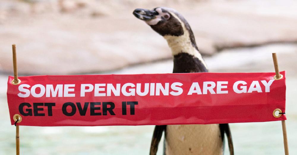 Catholic journalist deems gay penguins 'deviants'