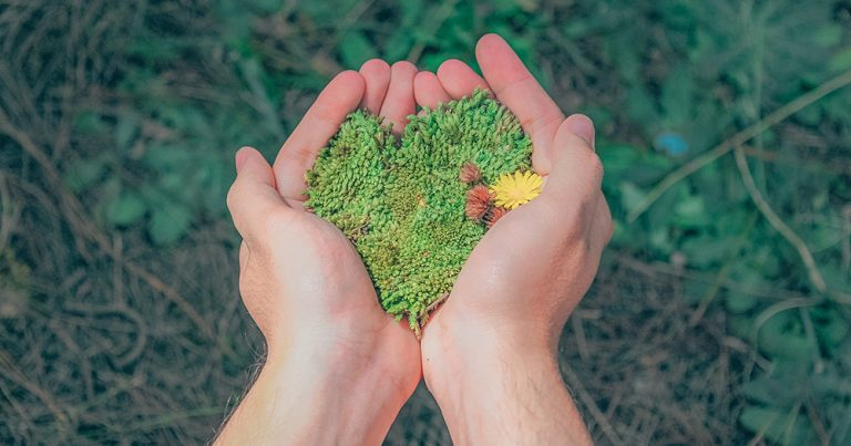 Cupped hands holding moss