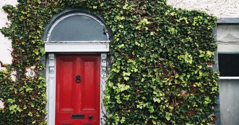 A red front door with the building covered by ivy